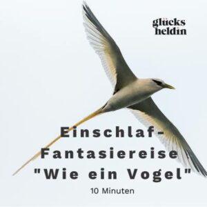 Das Cover zeigt einen Vogel, denn darum geht es in dieser wunderbaren Fantasiereise.